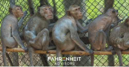 Updated: Five Monkeys in a Cage (And One Important Business Lesson)