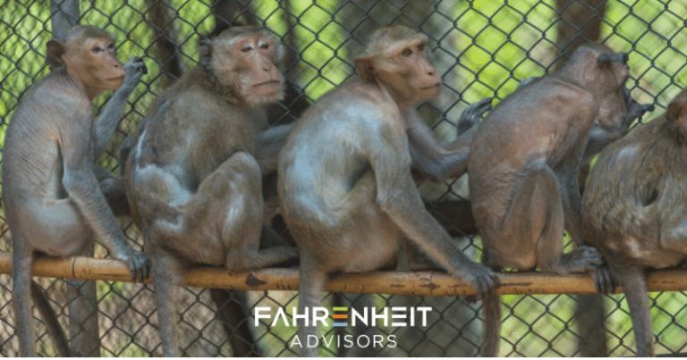 5 Monkeys in a Cage   Business Advisory   Fahrenheit Advisors